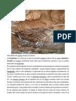Animales en Incubacion..docx