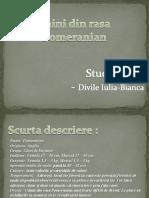 pomeranian.pptx
