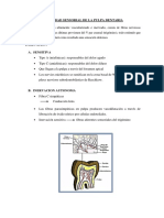 Actividad sensorial de la pulpa