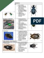 coleotera_taxonomia_completa elmer oficial para imprimir.docx