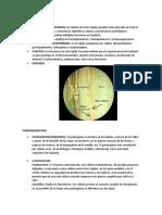 TEJIDO FUNDAMENTAL.docx