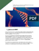 Que es el ARN