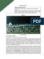 Geotria_australis_P03R4_RCE_CORREGIDO.doc