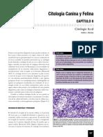 Dermato - Raskin_mostra.pdf