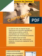 Produccion caprinos