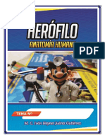 herofilo 1