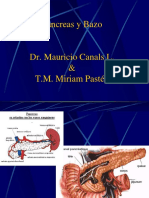Clase 5 Pancreas y Bazo 2019