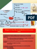 Biología 1 Bloque IV.pdf