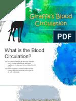 giraffe blood circulation