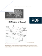 The Human Speech Apparatus