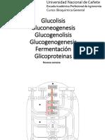 Clase IX - Bioquimica General