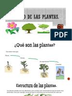 El mundo de las plantas 2