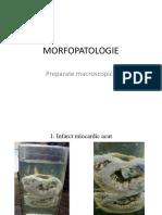 Morfopatologie-1