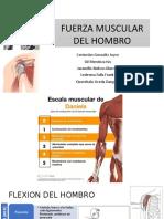 FUERZA-MUSCULAR-DEL-HOMBRO 1.pptx