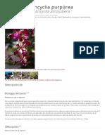 encyclia-atrorubens
