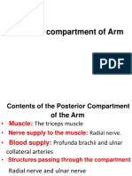 posterior compartment of arm