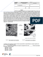 2º teste 11ºVBv1.pdf