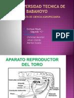 aparato reproductor del toro.pptx