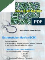 Extracellular-Matrix-4