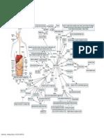 Digestivesystem_mindmap