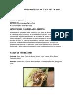 Elasmopalpus Lignosellus en El Cultivo de Maiz