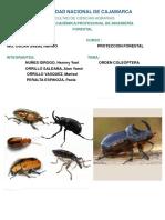 Orden Coleoptera en PDF (2)[262]