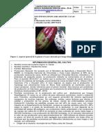FORMATO INFORME FITOPATOGENOS (1)
