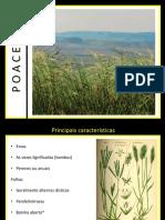 Aula_Poaceae_Cyperaceae_Juncaceae