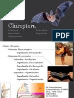 chiroptera FINAL