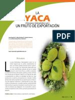 La Yaca (Artocarpus heterophyllus Lam.). Un fruto de exportación