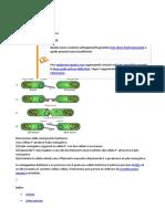 coniugazione batterica