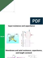 neurophysiol_06_ActionPotential (1).pptx