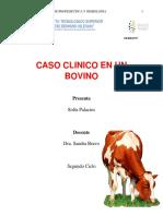Caso Clinico Bovino