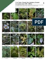 1076_ecuador_plantas_comunes_de_los_yaltes.pdf
