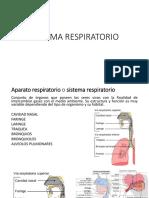 Sistema Respiratorio y Circulatorio