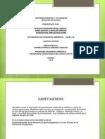 Espermatogenesis KEILER