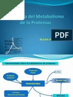Fisiología del Metabolismo de la Proteínas