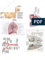 Anatomia Fotos