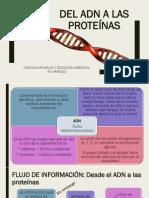 ADN DE LAS PROTEINAS