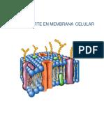 Tansporte_membranal-convertido