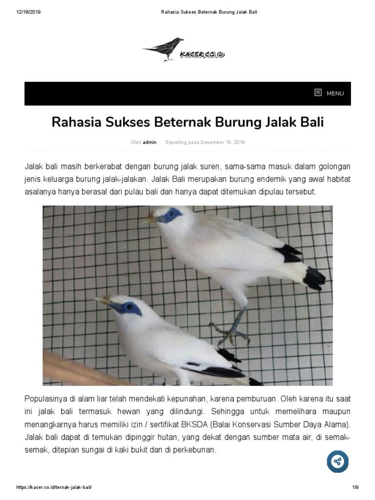 Rahasia Sukses Beternak Burung Jalak Bali