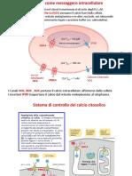 A4-1d - Il calcio come messaggero intracellulare (2019 - Facoltativo).pdf