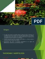 granado-expo.pptx