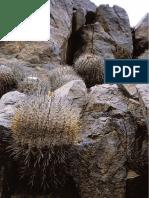Two new Copiapoas (Cactaceae) para Chile  DCJMB09.pdf