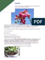 Come Innaffiare Una Phalaenopsis