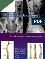 Anatomía (columona).ppx