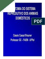 Anatomia-do-Sistema-Reprodutiva-dos-Animais-Domesticos