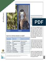 avifauna.pdf