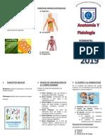 triptico hoy anatomia y fisiologia.docx