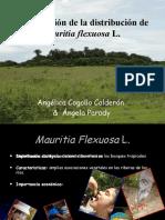 Modelizacion de la distribucion de Mauritia flexuosa